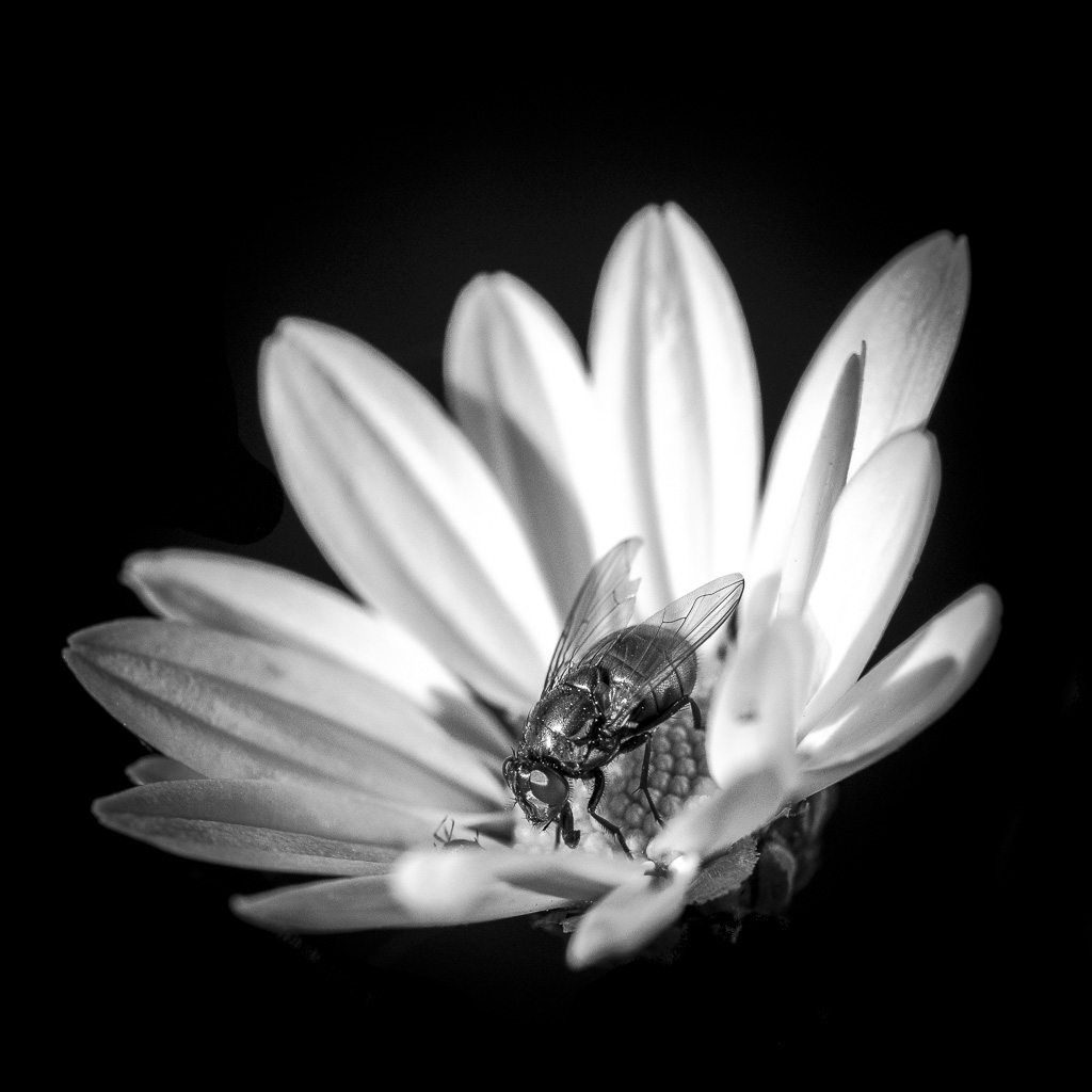 Black and White by Florence Raskin