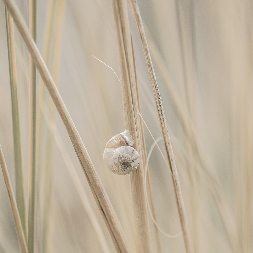 Tinies by Florence Raskin